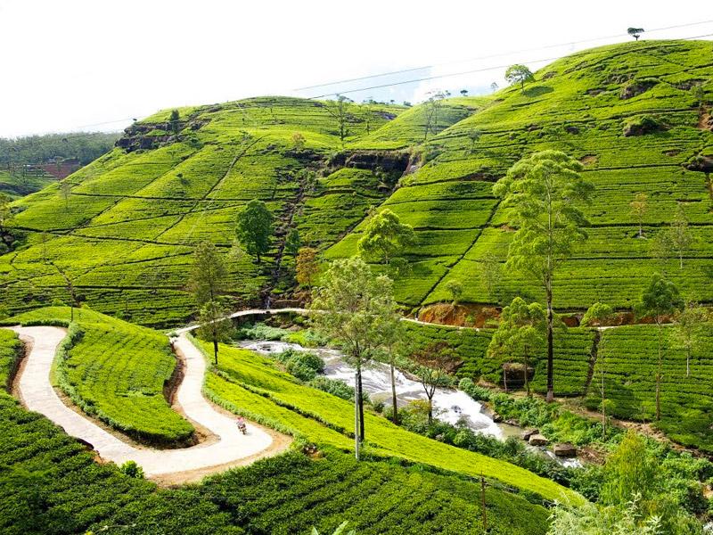 Place to Visit in Nuwara Eliya, Sri Lanka
