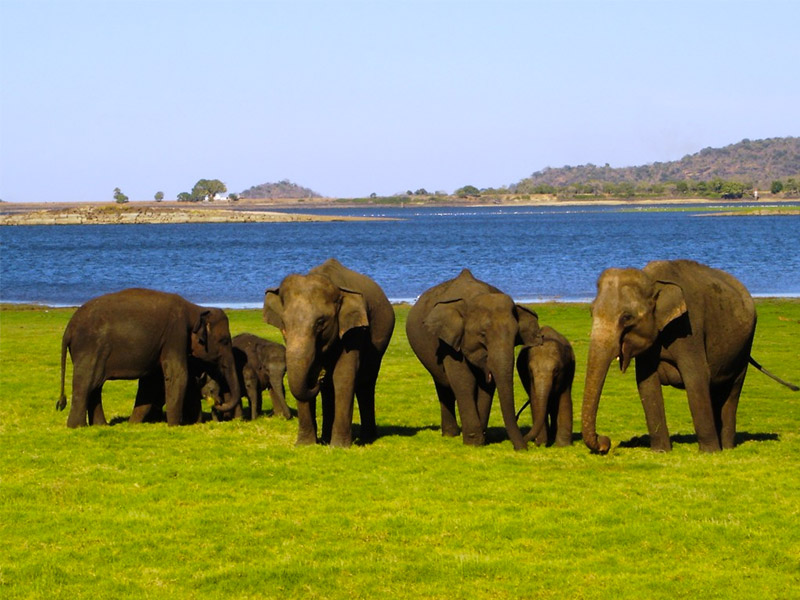 Place to Visit in Yala National Park, Sri Lanka