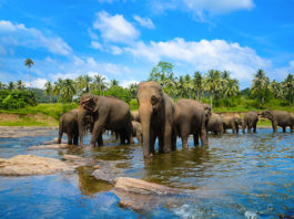 Top 10 Places to Visit in Sri Lanka