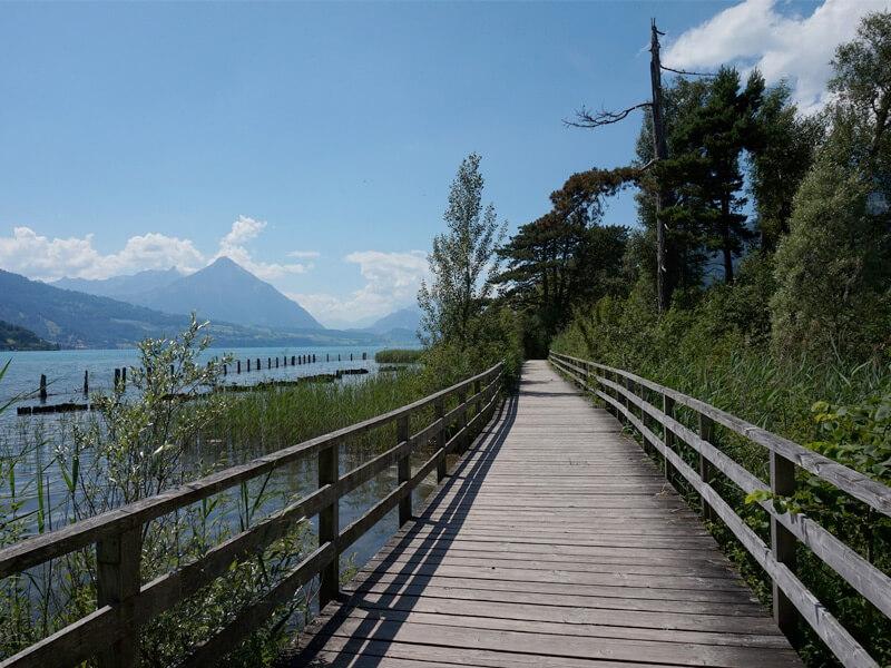 Weissenau Nature Reserve in Interlaken, Switzerland