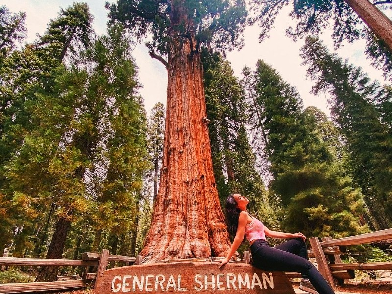General Sherman Tree - World's Largest Tree on the Earth, Sequoia National Park, California